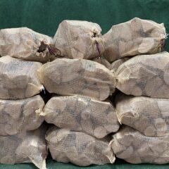"Kiln Dried Ash 10"" Logs 30 x 40L nets"